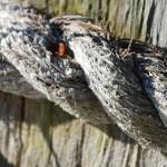 How to Log BIND Queries on Ubuntu 12.10